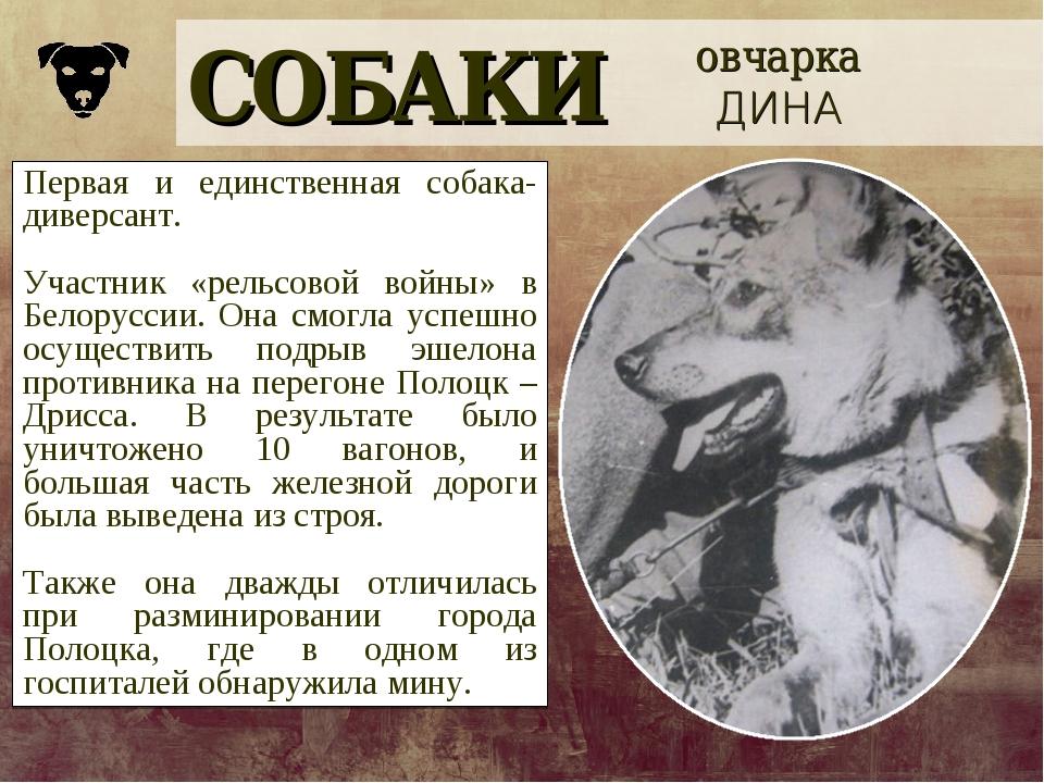 СОБАКИ овчарка ДИНА Первая и единственная собака-диверсант. Участник «рельсов...