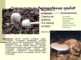Специалист по выращиванию грибов Шампиньон растет влугах, впарках, садах, о