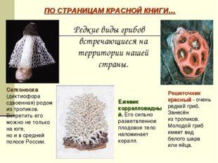 Редкие виды грибов встречающиеся на территории нашей страны. ПО СТРАНИЦАМ КРА