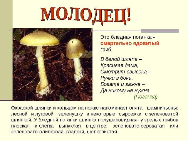 Это бледная поганка - смертельно ядовитый гриб. В белой шляпе – Красивая дама...