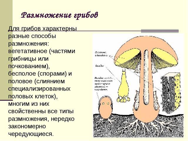 Размножение грибов Для грибов характерны разные способы размножения: вегетати...