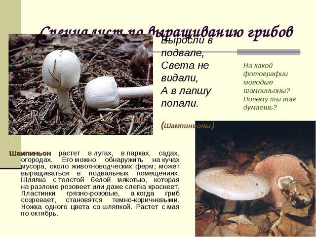Специалист по выращиванию грибов Шампиньон растет влугах, впарках, садах, о...