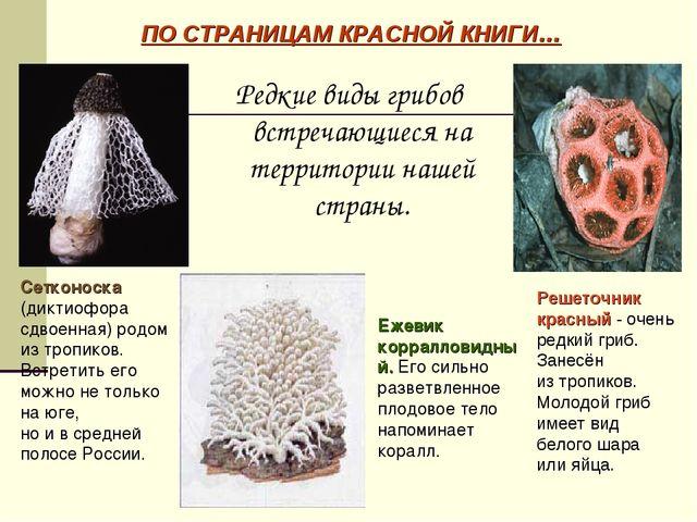 Редкие виды грибов встречающиеся на территории нашей страны. ПО СТРАНИЦАМ КРА...