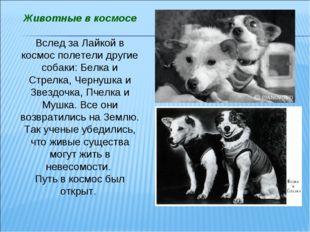 Животные в космосе Вслед за Лайкой в космос полетели другие собаки: Белка и С