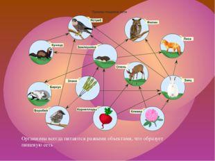 Организмы всегда питаются разными объектами, что образует пищевую сеть