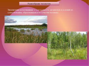 Разнообразие экосистем Экосистема естественная — совокупность организмов и ус