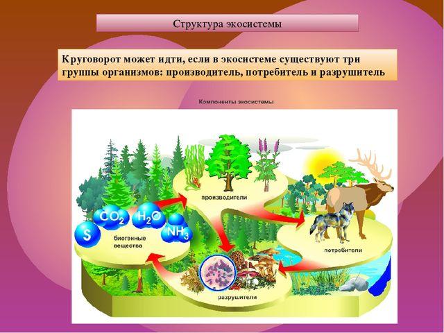 Структура экосистемы Круговорот может идти, если в экосистеме существуют три...