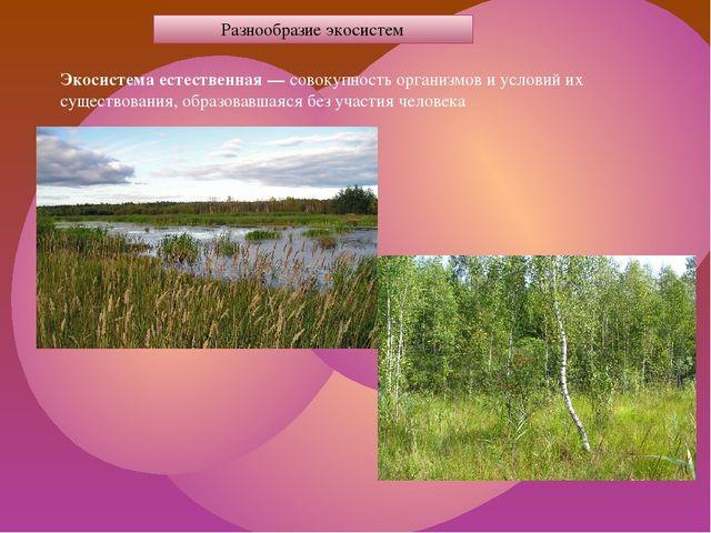 Разнообразие экосистем Экосистема естественная — совокупность организмов и ус...