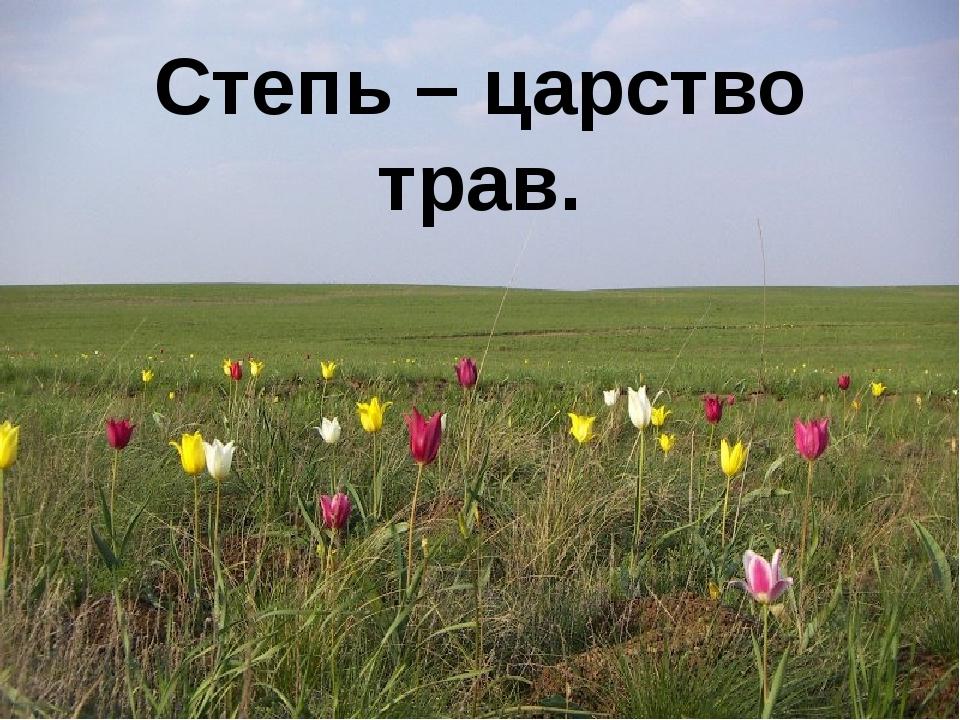 Степь – царство трав.