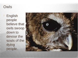 Owls English people believe that owls swoop down to devour the souls of the d