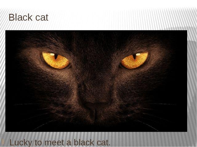 Black cat Lucky to meet a black cat.