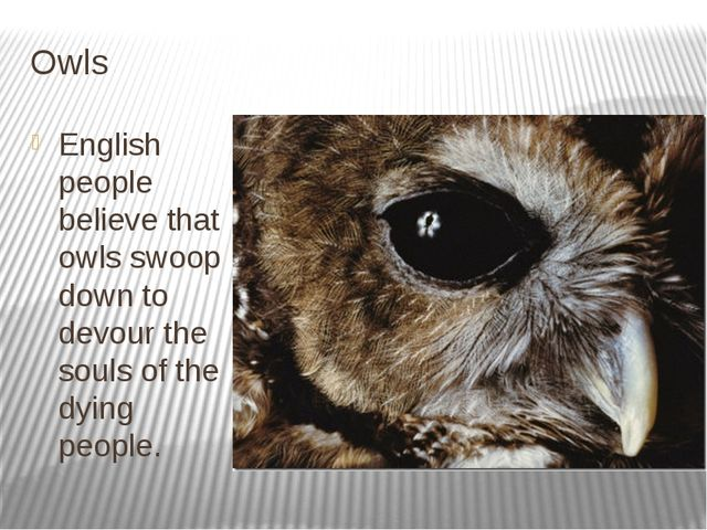 Owls English people believe that owls swoop down to devour the souls of the d...