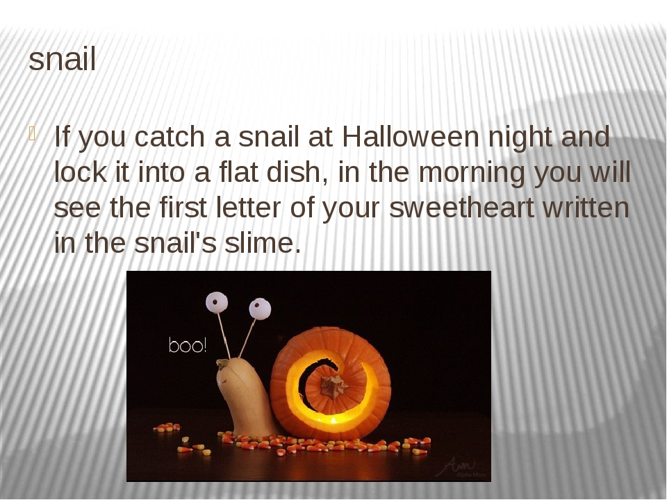 snail If you catch a snail at Halloween night and lock it into a flat dish, i...