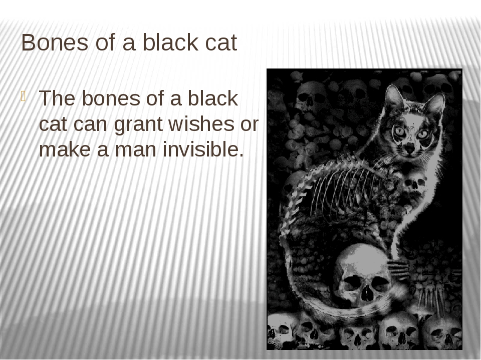 Bones of a black cat The bones of a black cat can grant wishes or make a man...