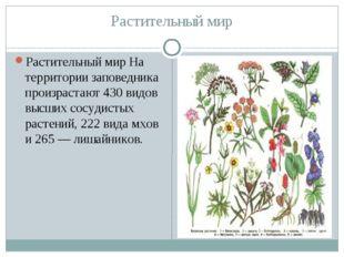 Растительный мир Растительный мир На территории заповедника произрастают 430