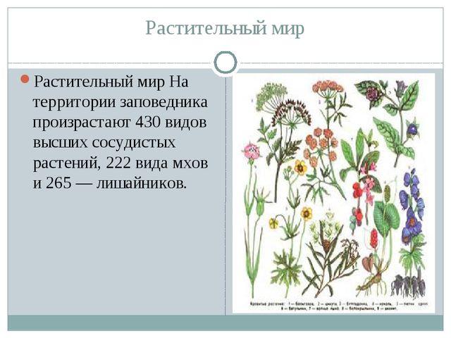 Растительный мир Растительный мир На территории заповедника произрастают 430...