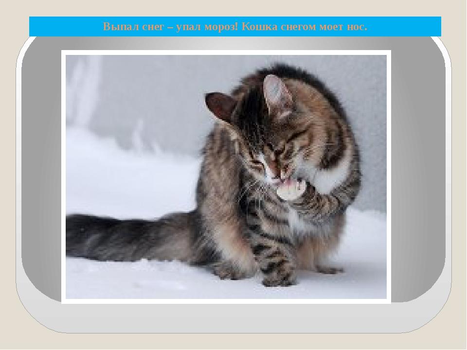 Выпал снег – упал мороз! Кошка снегом моет нос.