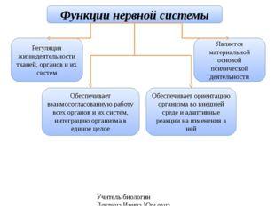 Учитель биологии Деулина Ирина Юрьевна Функции нервной системы Регуляция жизн