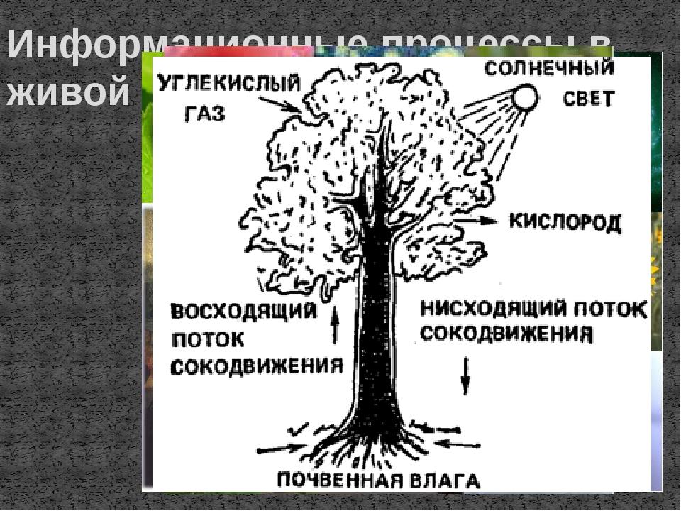 Информационные процессы в живой природе