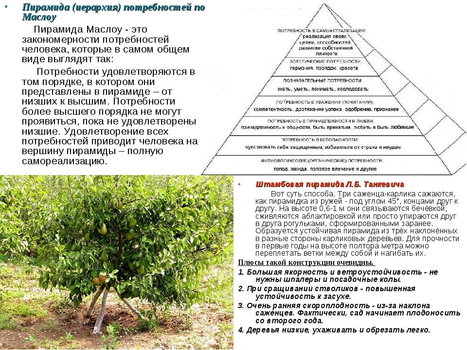 Пирамида (иерархия) потребностей по Маслоу Пирамида Маслоу - это закономернос...