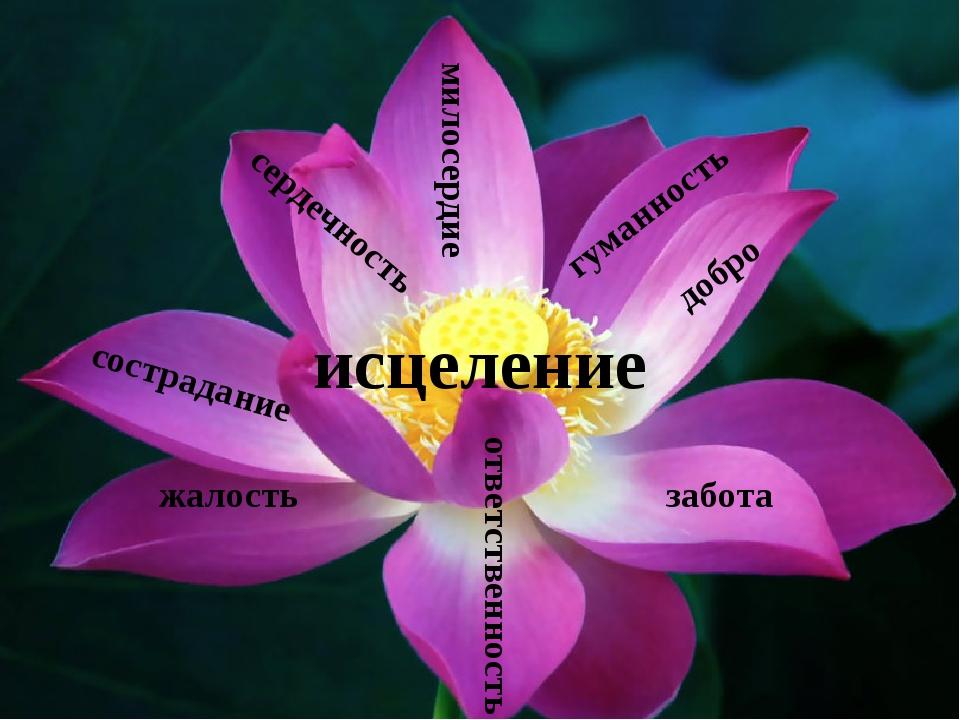 милосердие добро сострадание забота ответственность исцеление жалость гуманн...