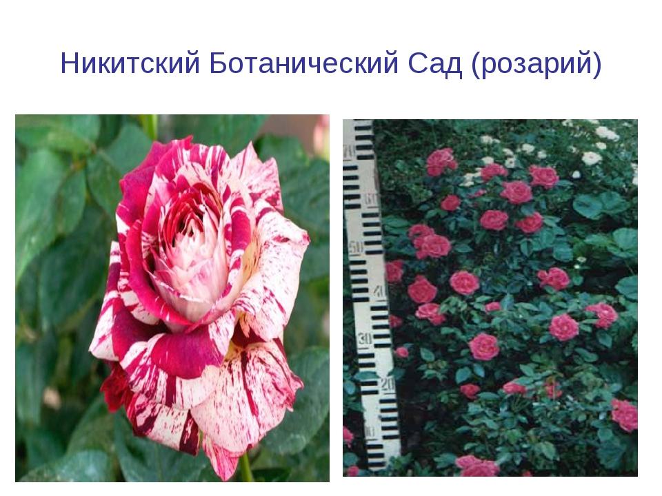 Никитский Ботанический Сад (розарий)