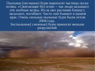 Пыльные (песчаные) бури переносят частицы песка почвы. «Сжигающие без огня» –