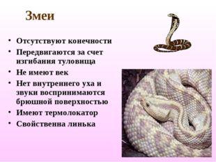 Змеи Отсутствуют конечности Передвигаются за счет изгибания туловища Не имеют