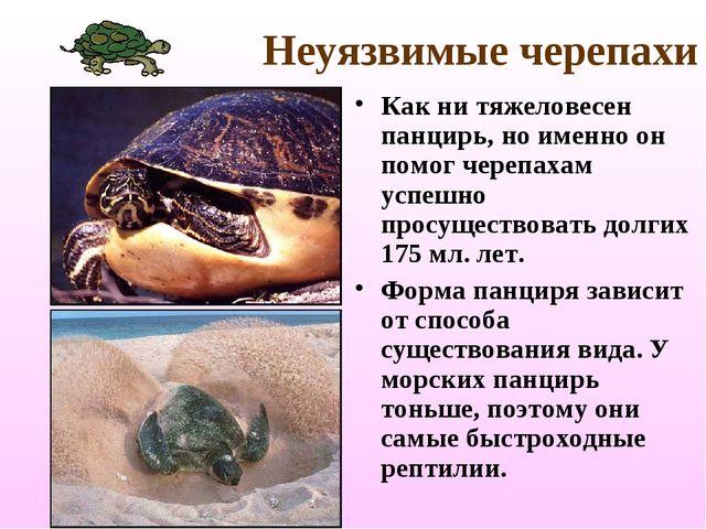 Неуязвимые черепахи Как ни тяжеловесен панцирь, но именно он помог черепахам...