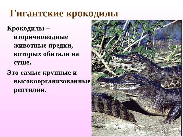 Гигантские крокодилы Крокодилы – вторичноводные животные предки, которых обит...