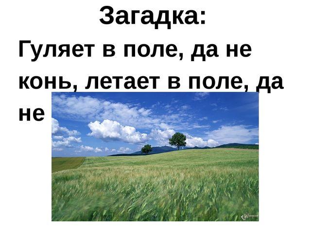 Загадка: Гуляет в поле, да не конь, летает в поле, да не птица.