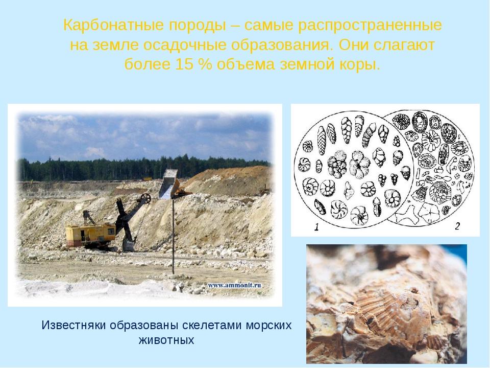 Карбонатные породы – самые распространенные на земле осадочные образования. О...