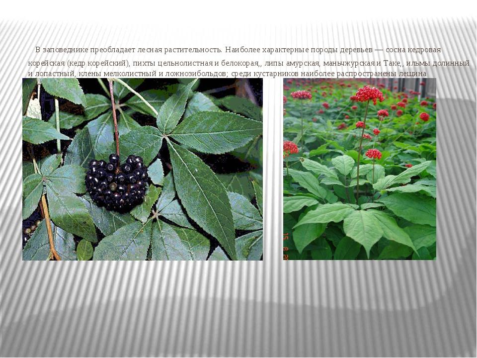 В заповеднике преобладает лесная растительность. Наиболее характерные породы...