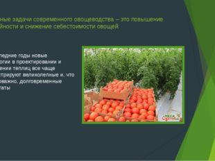Основные задачи современного овощеводства – это повышение урожайности и сниже