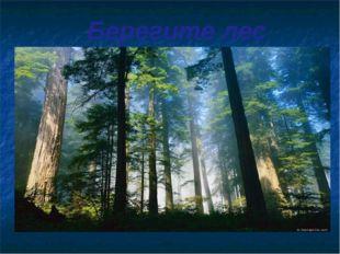 Берегите лес