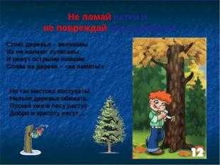 Не ломай ветки и не повреждай кору деревьев Стоят деревья – великаны Их не жа