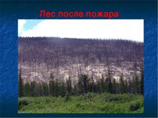 Лес после пожара
