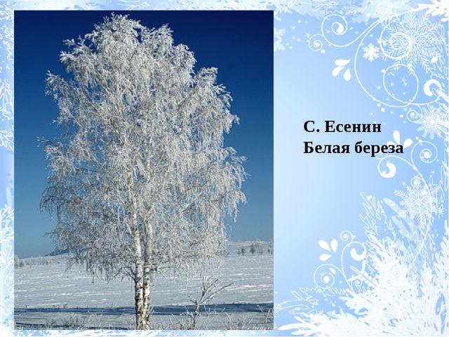 С. Есенин Белая береза С. Есенин