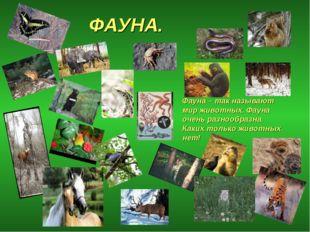 ФАУНА. Фауна – так называют мир животных. Фауна очень разнообразна. Каких тол
