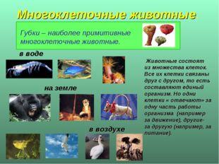 Многоклеточные животные. Животные состоят из множества клеток. Все их клетки
