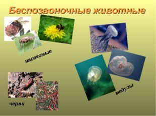 Беспозвоночные животные черви насекомые медузы