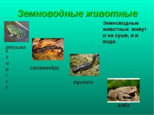 Земноводные животные Земноводные животные живут и на суше, и в воде. kzueirf