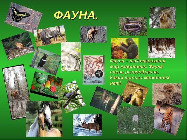 ФАУНА. Фауна – так называют мир животных. Фауна очень разнообразна. Каких тол...
