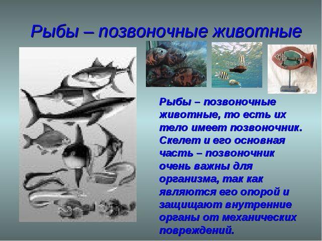 Рыбы – позвоночные животные Рыбы – позвоночные животные, то есть их тело имее...