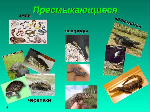 Пресмыкающиеся че черепахи ящерицы крокодилы змеи