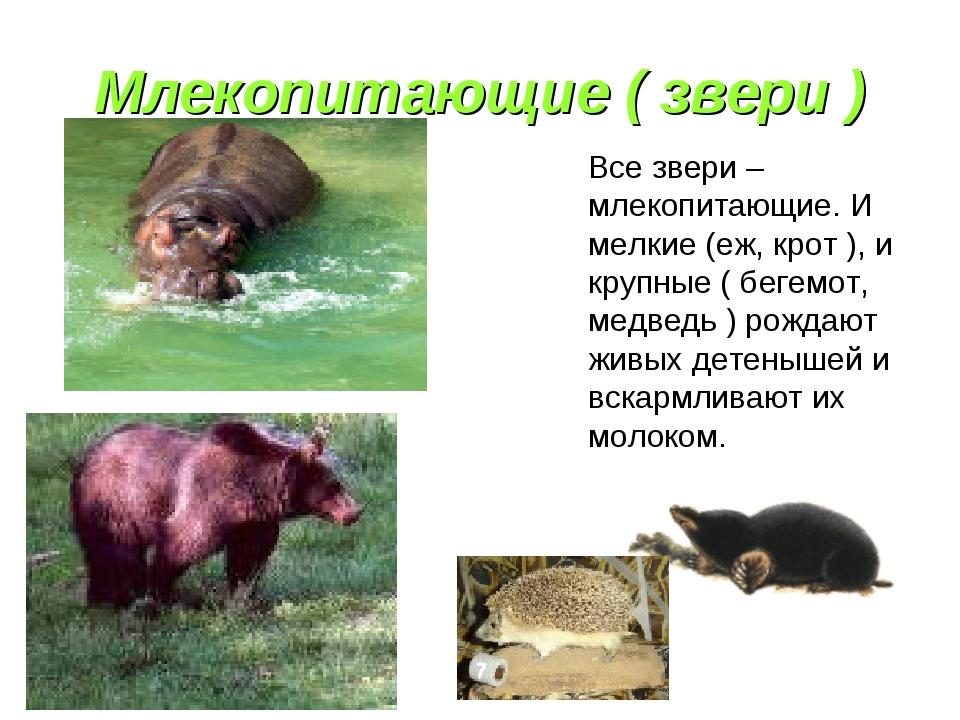 Млекопитающие ( звери ) Все звери – млекопитающие. И мелкие (еж, крот ), и кр...