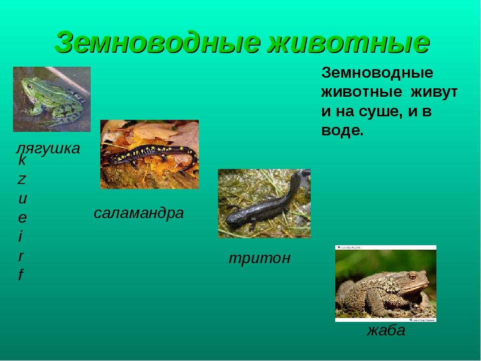 Земноводные животные Земноводные животные живут и на суше, и в воде. kzueirf...