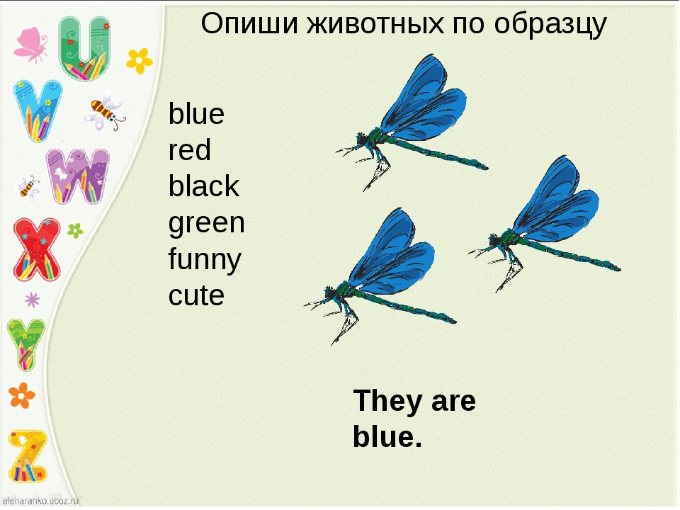 Опиши животных по образцу They are blue. blue red black green funny cute