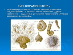 ТИП ФОРАМИНИФЕРЫ Фораминиферы — морские организмы, имеющие причудливые наружн
