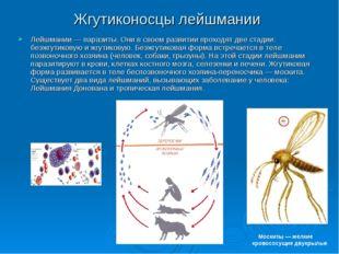 Жгутиконосцы лейшмании Лейшмании — паразиты. Они в своем развитии проходят дв